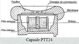 ptt24